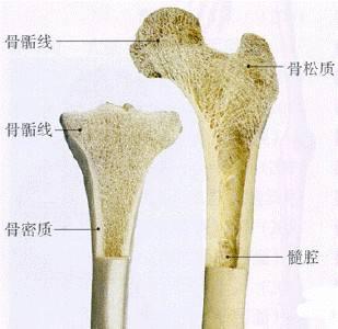 骨密度仪检测对预防骨质疏松的必要性