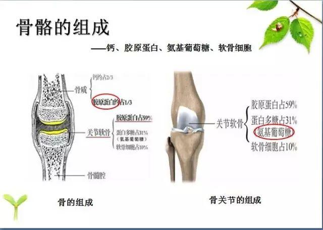 超声骨密度仪检测骨密度的方法