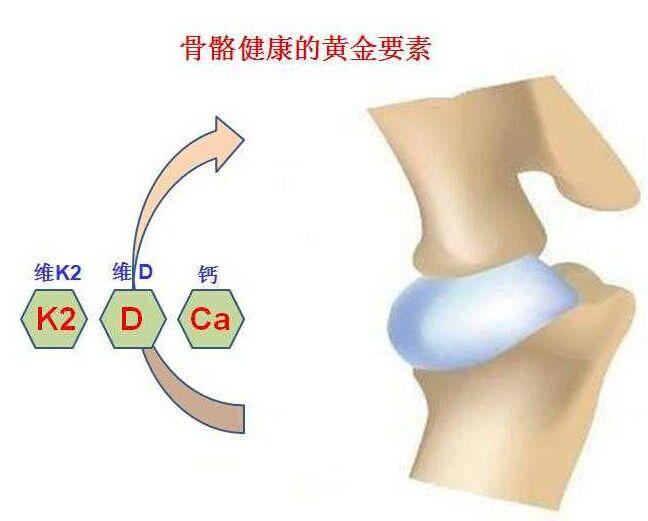 超声骨密度检测仪厂家分析钙对骨骼健康的重要