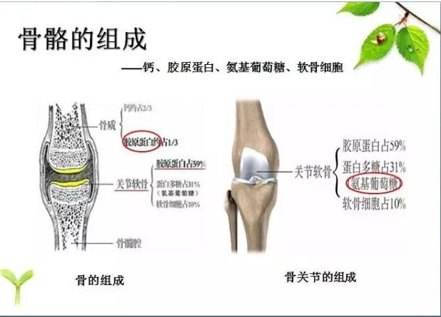 便携式骨密度检测仪品牌详述骨密度增加诊断